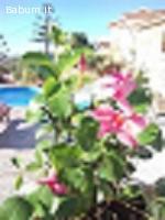 casa vacanza con Piscina affitto