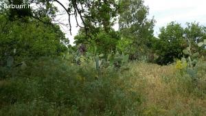 Terreno agricolo 4000 Mq