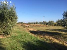 Terreno edificabile a Cortona (AR)