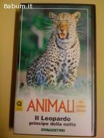 Animali il leopardo principe della